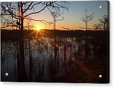 Cypress Swamp At Sunrise Acrylic Print