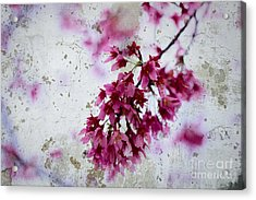 Deep Pink Flowers With Grey Concrete Texture Background Acrylic Print