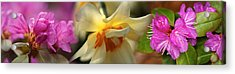 Details Of Flowers Acrylic Print by Panoramic Images
