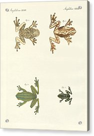 Different Kinds Of Foreign Tree Frogs Acrylic Print by Splendid Art Prints