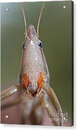Do I Bug You Acrylic Print by Gary Bridger