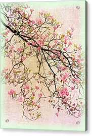 Dogwood Canvas 2 Acrylic Print by Jessica Jenney