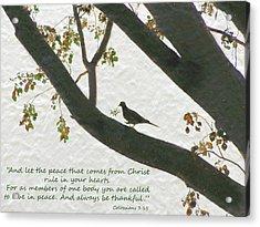 Dove Silhouette On Tree Acrylic Print