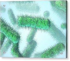 E. Coli Bacteria Acrylic Print by Maurizio De Angelis