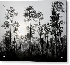 Early Morning Fog Landscape Acrylic Print by Rudy Umans