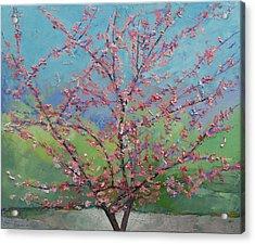 Eastern Redbud Tree Acrylic Print by Michael Creese