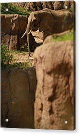 Elephant Acrylic Print by Tinjoe Mbugus