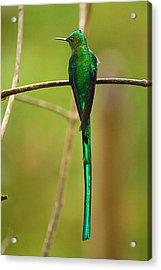 Emerald Glow Acrylic Print