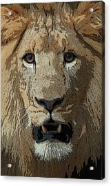 Acrylic Print featuring the photograph Eye Contact by Joseph G Holland