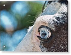 Eye Of The Beholder Acrylic Print by Frank Feliciano