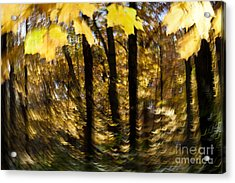 Fall Abstract Acrylic Print by Steven Ralser