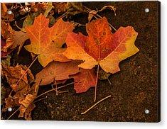 West Fork Fallen Leaves Acrylic Print