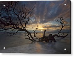 Fallen Tree Acrylic Print by James Roemmling