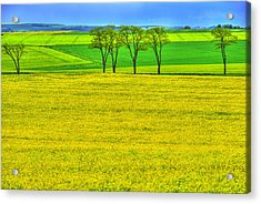 Fields Of Dreams Acrylic Print by Midori Chan