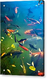 Fish Pond Acrylic Print