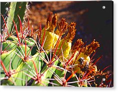 Fishhook Cactus Acrylic Print by David Rizzo