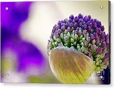 Flower Acrylic Print by Christine Sponchia