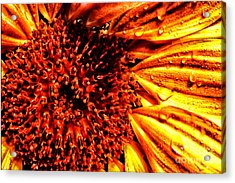 Flower Petals And Dewdrops Acrylic Print by Thomas R Fletcher