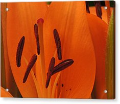 Flower Series Acrylic Print