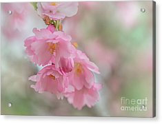 Flower Acrylic Print by Sylvia  Niklasson