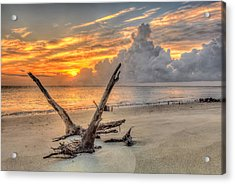 Folly Beach Driftwood Acrylic Print
