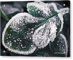Frosty Leaf Acrylic Print by Elena Elisseeva