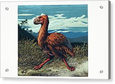 Gaston's Bird Acrylic Print by Deagostini/uig