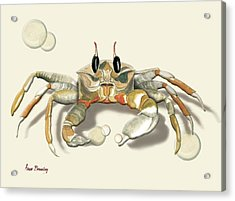 Ghost Crab Acrylic Print by Anne Beverley-Stamps