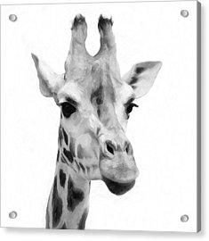 Giraffe On White Background  Acrylic Print