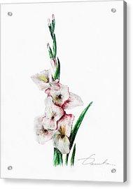 Gladiolus Acrylic Print by Danuta Bennett