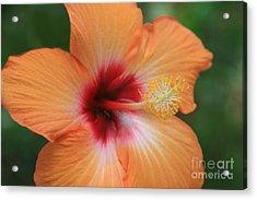Gods Garden Acrylic Print by Sharon Mau