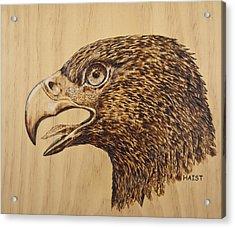 Golden Eagle Acrylic Print by Ron Haist