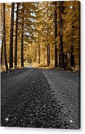 Golden Pines Acrylic Print by David Stine