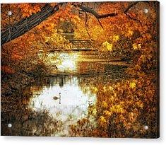 Golden Pond Acrylic Print by Jessica Jenney