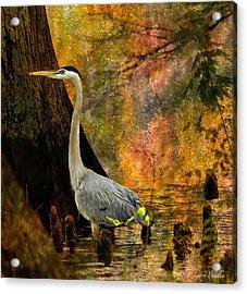 Great Blue Heron Slowly Fishing Acrylic Print by J Larry Walker
