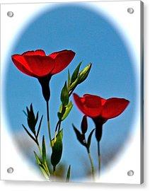 Flower 6 Acrylic Print