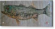 Gyotaku - Striped Bass - Rock Fish - Striper Acrylic Print
