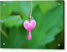 Acrylic Print featuring the photograph Heart On A Vine by Kathy Gibbons