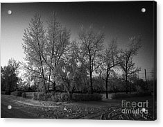 hoar frost covered trees on street in small rural village of Forget Saskatchewan Canada Acrylic Print by Joe Fox