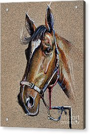 Horse Face - Drawing  Acrylic Print