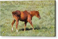 Horse On The Farm Acrylic Print by Dan Sproul
