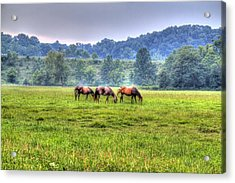 Horses In A Field Acrylic Print