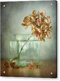 Hydrangea Acrylic Print by Mandy Disher