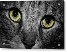 In A Cats Eye Acrylic Print by Doug Long