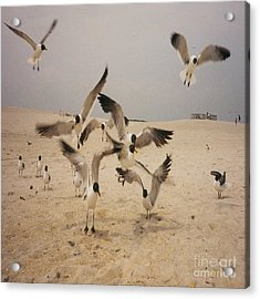 In Flight Acrylic Print by Mj Petrucci