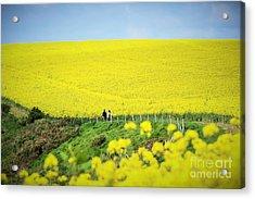 Rapeseed Field... Love Story Acrylic Print