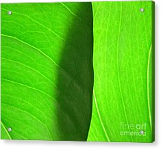 In Passing Light Acrylic Print by CML Brown