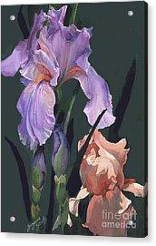 Iris Study Acrylic Print by Suzanne Schaefer