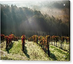 Italy, Tuscany, Chianti, Autumn Acrylic Print