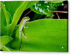 Acrylic Print featuring the photograph It's Easy Being Green by TK Goforth